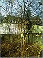January Frost Botanic Garden Freiburg - Master Botany Photography 2014 - panoramio (27).jpg