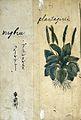 Japanese Herbal, 17th century Wellcome L0030106.jpg