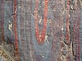 Jaspilite banded iron formation (Soudan Iron-Formation, Neoarchean, ~2.69 Ga; Stuntz Bay Road outcrop, Soudan Underground State Park, Soudan, Minnesota, USA) 49 (19037950918).jpg
