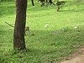 Jayanthipura, Polonnaruwa, Sri Lanka - panoramio (35).jpg