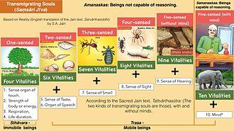 Jīva (Jainism) - Classification of Saṃsāri Jīvas (Transmigrating Souls) as per Jainism.