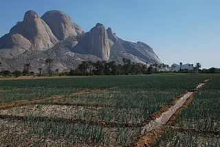 Kassala onion Totil.jpg