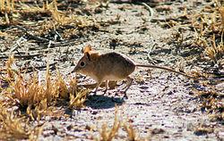 Kgalagadi National Park, South Africa (3187485470).jpg