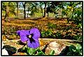 Kicsivirág - panoramio.jpg