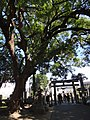 Kigumano-shrine05.jpg