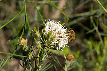 Kings park gnangarra 250815-111.jpg