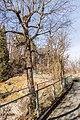 Klagenfurt Villacher Vorstadt Botanischer Garten Hopfenbuche 18012018 9355.jpg