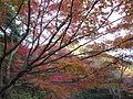 Kobe Municipal Arboretum in 2013-11-16 No,4.JPG