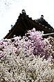 Korea Palace Spring Flowers 04.jpg