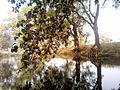 Kosli, Haryana 123302, India - panoramio (18).jpg