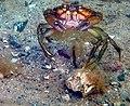 Krabbe PADIDIGITAL-U-P.jpg