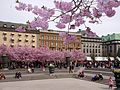 Kungsträdgården vår 2012d.jpg
