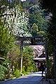 Kyoto, 桜, sakura, Otoyo Shrine - panoramio.jpg