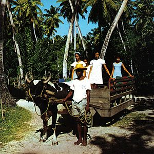 Transport in Seychelles - A traditional ox-cart on La Digue