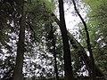 Landschaftsschutzgebiet Waldgebiete bei Dielingdorf und Handarpe LSG OS 00025 Datei 16.jpg