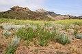 Lang Ranch Oakbrook North Ranch Thousand Oaks May 2019 009.jpg
