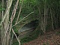 Large culvert under the A272 NE of Ansty - geograph.org.uk - 1365759.jpg