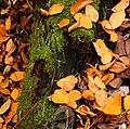 Leafy Trunk (266828743).jpg
