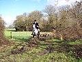 Leaving the covert near Lower Horncroft - geograph.org.uk - 353941.jpg