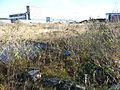 Leith Docks, Nov 2012 (8198192802).jpg