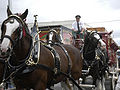 Lexington Barbecue Festival - Clydesdales.jpg