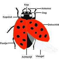 Preschool Ladybug Coloring Pages