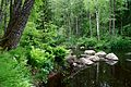 Lindulovskaja grove - River Bend.jpg