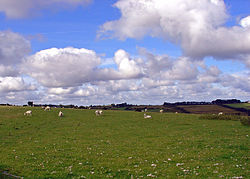 Sheep field at Gelligenlas, Llanarth