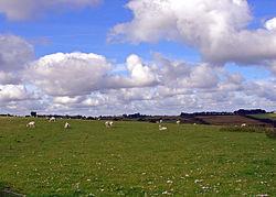 Gelligenlas, Llanarth