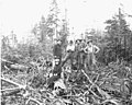 Logging crew and woman, Hamilton Logging Company, ca 1912 (KINSEY 282).jpeg