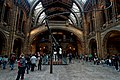 London - Cromwell Road - Natural History Museum 1881 by Alfred Waterhouse - Central Hall - View South on the backside of a Diplodocus II.jpg