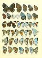 Macrolepidoptera15seit 0319.jpg