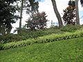 Madeira em Abril de 2011 IMG 1823 (5663686431).jpg