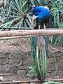 Madeira em Abril de 2011 IMG 2165 (5664816240).jpg