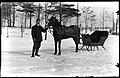 Man with horse and sleigh in winter (28408680674).jpg