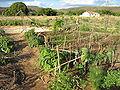 Mandala irrigation.jpg