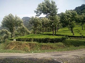 Manjolai on road.jpg
