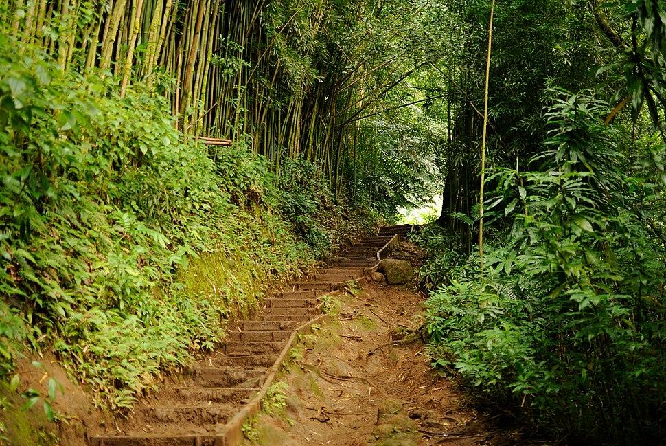Manoa Falls Trail (8331389248)