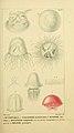 Manuel d'actinologie ou de zoophytologie (Plate XXXV) (6992661560).jpg