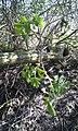 Marston Green, UK - panoramio (5).jpg