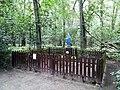 Maruszka Puszcza Zielonka (6).jpg