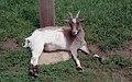 Marwell Zoo, Winchester (290121) (9456513386).jpg