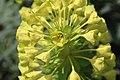 Massy fleurs rue Léonard de Vinci 3.jpg