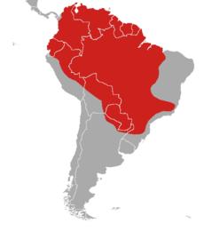 תפוצה של המזאמה האדומה