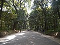 Meiji-jingu Wald 2.jpg