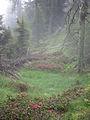 Misty Mountain Forest (6037443287).jpg