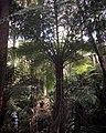 Monga National Park giant fern tree.jpg