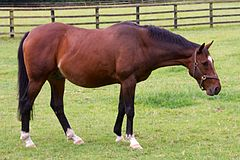 Moscow Flyer at National Stud.jpg