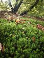 Moss (detail) (8105237250).jpg