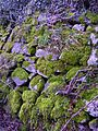 Moss covered wall.jpg